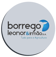 borrego-leonor